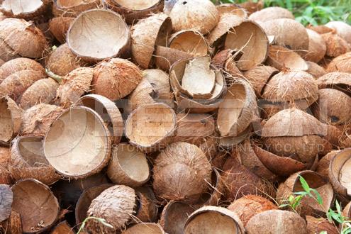 Coconut Shell Carbonized by Biochar Making Machine