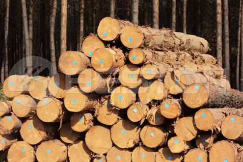 Wood Carbonized by Wood Charcoal Making Machine