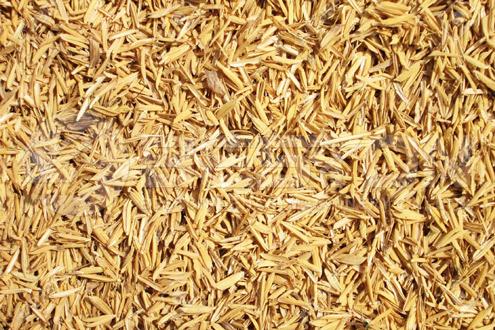 Rice Husk