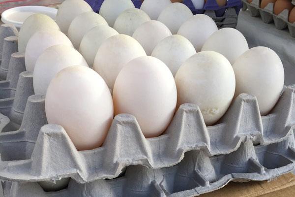Duck Egg Trays